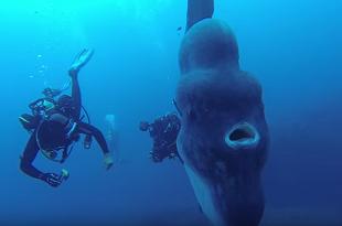 """Nhiếp ảnh gia chạm trán """"quái vật"""" đại dương khổng lồ"""