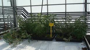 Thử nghiệm thành công 10 giống cây có thể trồng trên Sao Hỏa