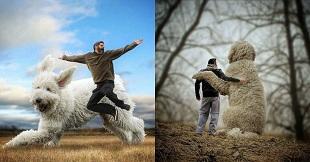 """Loạt ảnh chú chó khổng lồ """"lên đỉnh"""" trên Instagram"""