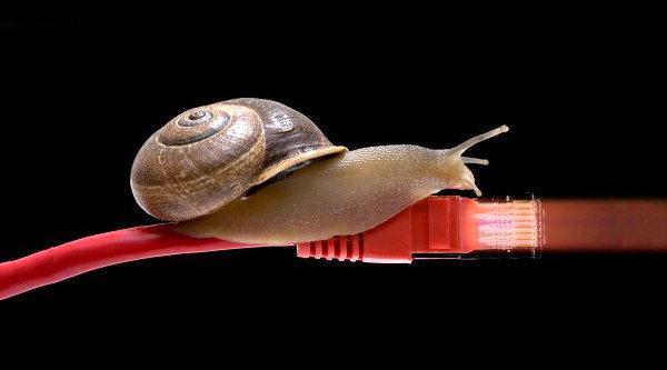 Mạng 'rùa bò' gây ức chế thần kinh