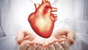 Dùng tế bào da nuôi thành quả tim hoàn toàn mới