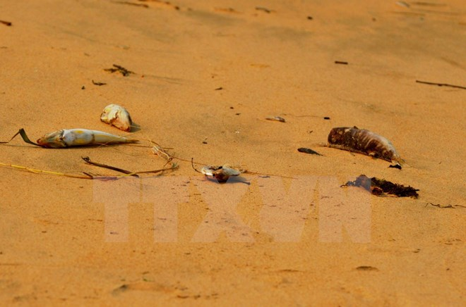 Cá chết ở Hà Tĩnh, Quảng Bình...