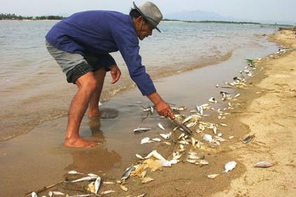 Vụ cá chết bất thường: Thủ tướng chỉ đạo hỗ trợ bà con ngư dân