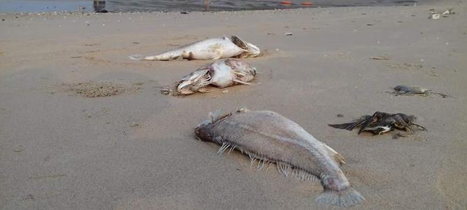 Chưa thể kết luận Formosa liên quan tới cá chết