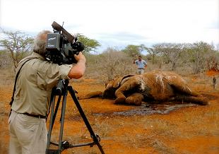 Thiêu huỷ 100 tấn ngà voi