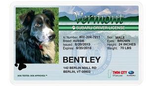 """Berlin thông qua luật cấp """"giấy phép lái xe"""" cho... chó"""