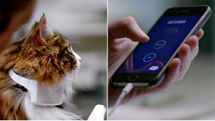 """Vòng cổ thông minh giúp """"nói chuyện"""" với mèo"""