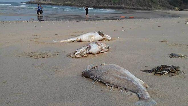 Đã xác định nguyên nhân cá chết nhưng chưa thể công bố