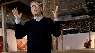 Bill Gates dạy làm giàu từ... nuôi gà