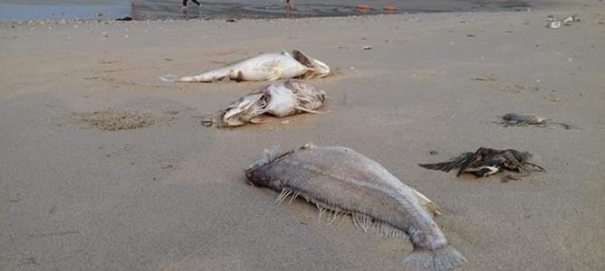 Formosa nhận lỗi làm cá chết, bồi thường 500 triệu USD