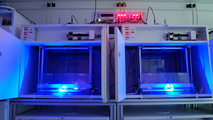 Tia UV diệt được tế bào ung thư trên chuột