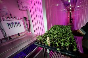 Mỹ thử nghiệm trồng rau sạch trên tàu ngầm