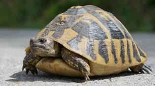 Mai rùa không phải để làm một việc như bạn nghĩ