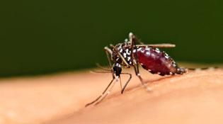 5 lý do khiến bạn dễ bị muỗi đốt hơn người khác