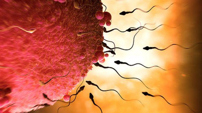 Khoa học: Hai người đàn ông cũng có thể có con