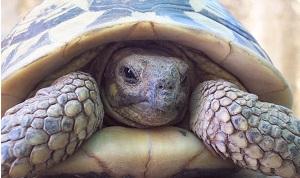 Tại sao rùa lại sống lâu như vậy?