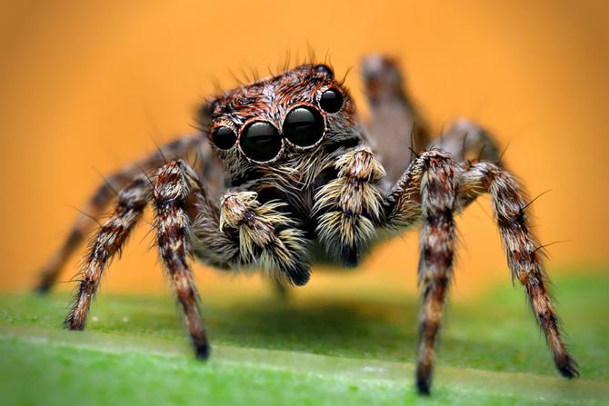Kết quả hình ảnh cho nhện