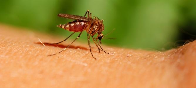Tại sao muỗi lại thích vo ve bên tai bạn?
