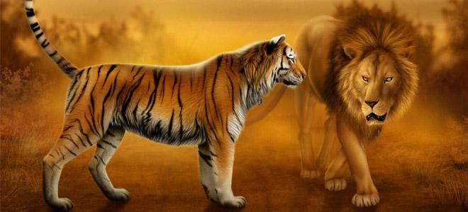 Sư tử và hổ: Kẻ nào đích thị là chúa tể rừng xanh?