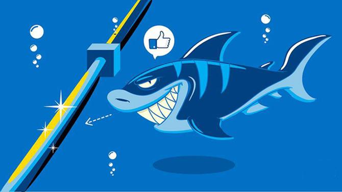 Cá mập có thực sự cắn cáp quang biển?