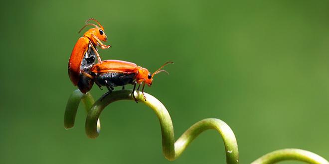 Điều gì sẽ xảy ra nếu côn trùng biến mất khỏi Trái Đất ?