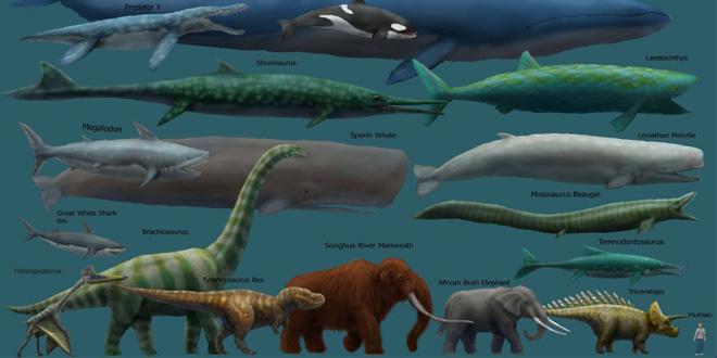 Giới hạn nào cho kích thước của động vật trong tự nhiên?