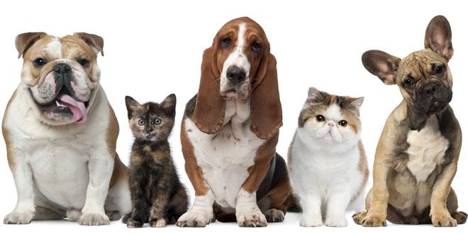 Vòng cổ cho thú cưng giá 100 USD có gì thú vị?