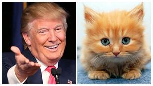 Tiện ích của Chrome tự động biến ảnh Donald Trump thành mèo con
