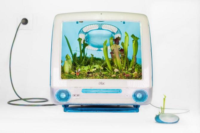 Đây là cách người ta kết hợp những chiếc máy Mac với... cây cảnh