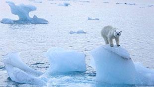 Bắc cực nóng lên đến 10 độ, băng tan thành nước