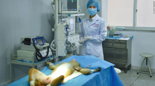 Trung Quốc cấy thành công mạch máu in 3D vào loài khỉ