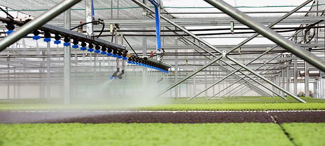 Lời giải từ nông nghiệp công nghệ cao