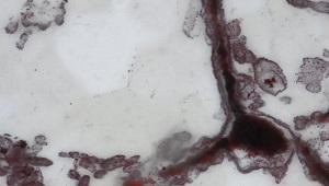Hóa thạch 4,2 tỷ năm vừa tìm thấy chứa manh mối sự sống trên sao Hỏa