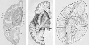 6 bộ phận của cơ thể vừa được phát hiện
