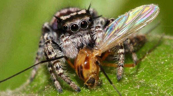 Loài nhện tiêu thụ 800 triệu tấn 'thực phẩm' mỗi năm