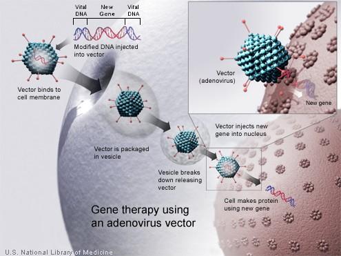 Liệu pháp gen là gì?