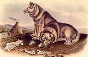 Nguồn gốc loài chó vẫn còn là một cuộc tranh luận sôi nổi