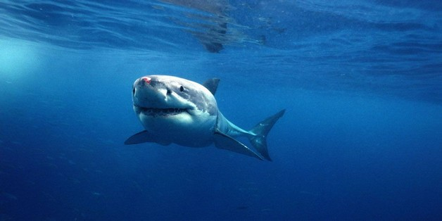 Úc sử dụng drone phát hiện cá mập để bảo vệ người dân