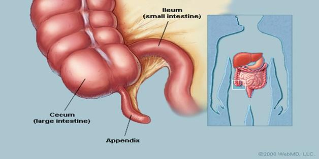Tác dụng của ruột thừa là gì?