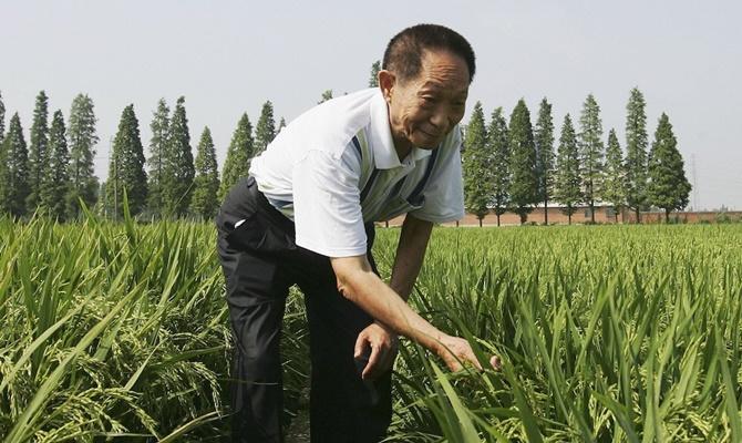Trung Quốc tạo ra được giống lúa thích nghi đất nhiễm mặn, giải quyết lượng thực cho 200 triệu dân