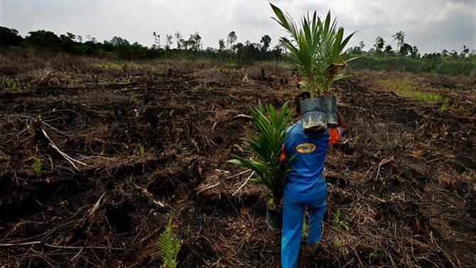 Bảo vệ các khu rừng nhiệt đới có lợi ích phụ: Giảm thay đổi khí hậu