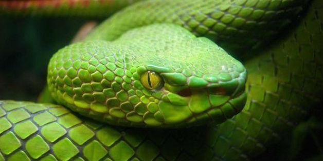 Vì sao Ireland không có rắn?