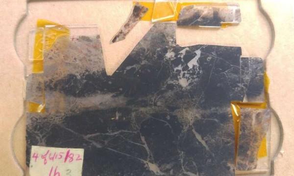 Hóa thạch cổ này khẳng định sự sống đã hình thành trên trái đất cách đây 3,5 tỉ năm và sớm hơn nữa