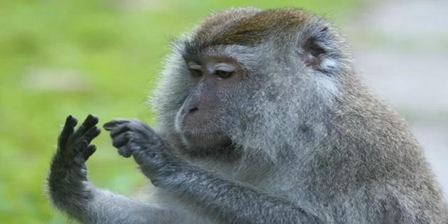 Động vật cũng có khả năng đếm?