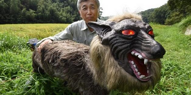 Robot... chó sói hỗ trợ nông dân Nhật bảo vệ mùa màng trước các loài phá hoại