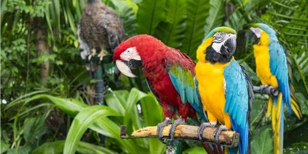 WWF: Thế giới sẽ mất phân nửa số loài động thực vật nếu con người không cắt giảm khí thải