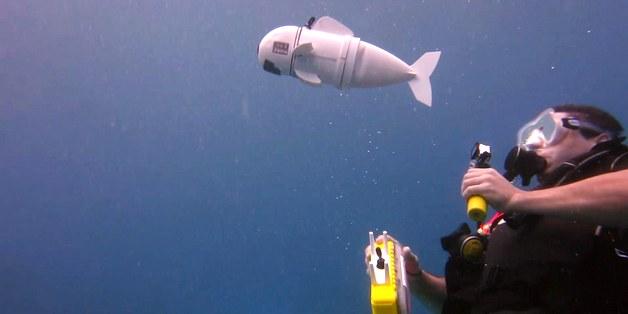 Robot với khả năng di chuyển như cá này sẽ thay đổi cách chúng ta khám phá đại dương