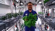 Đã có thể trồng rau tại Nam Cực mà không cần đất và ánh sáng mặt trời