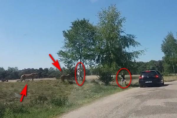 [Video] Thót tim với cảnh báo đuổi theo một gia đình trong công viên hoang dã