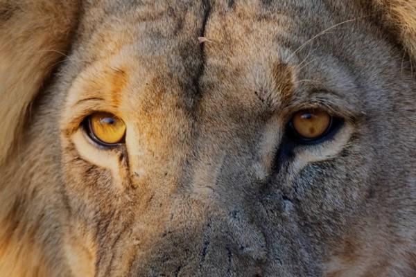 Đoạn video time-lapse sẽ đưa bạn khám phá trọn vẹn công viên hoang dã tại Châu Phi